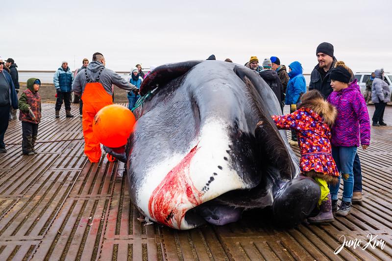 Utqiagvik Whaling-6104498-Juno Kim.jpg