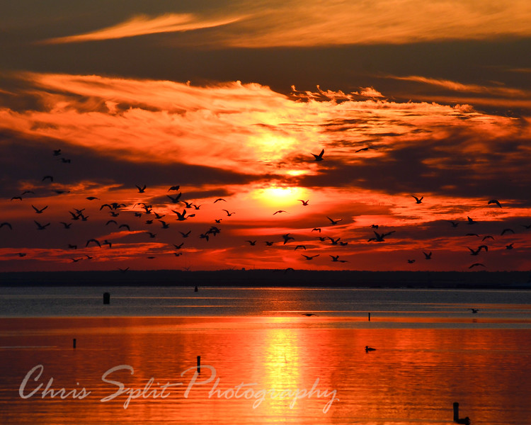 sunset with gulls over water.jpg