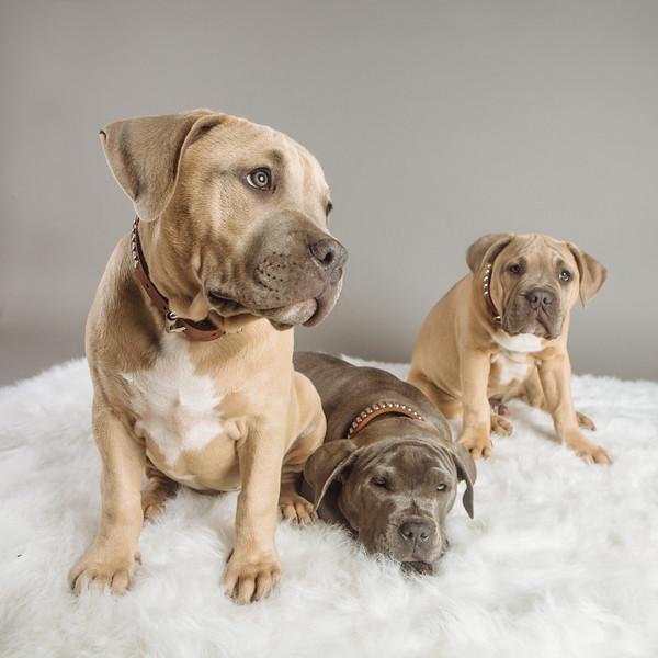 badap-puppies-16.jpg