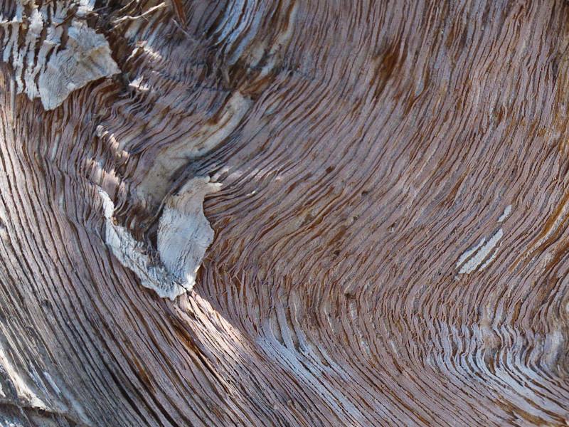 aug15_treebark.jpg