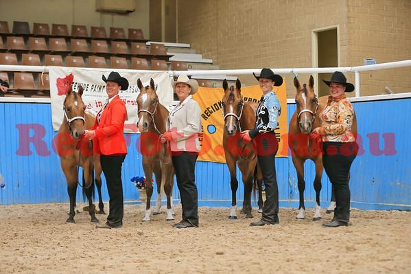 2014 03 01 WA Paint Horse State Championships  Halter