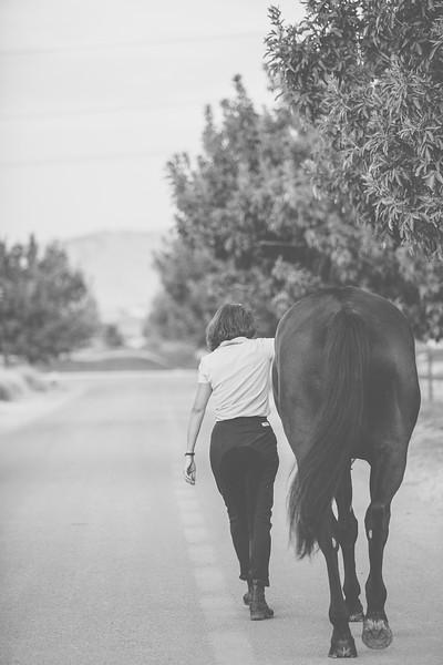 Horses-8.jpg