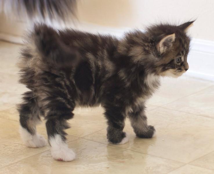 Kittens300.jpg