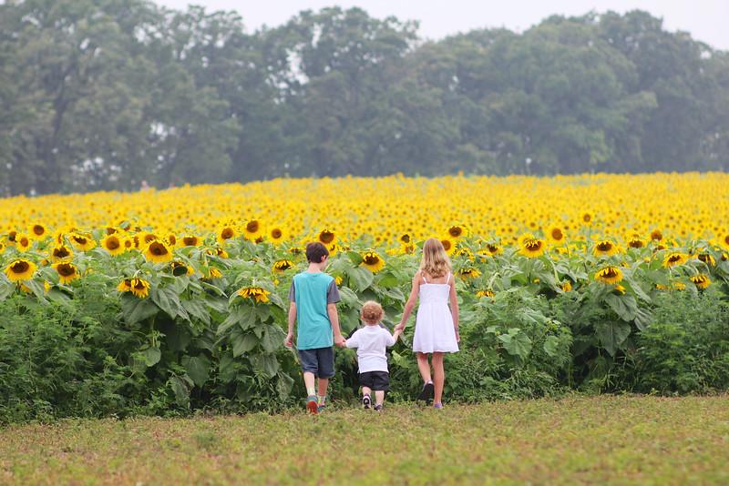 FamilySunflowers_ 96.jpg