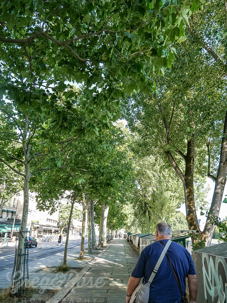The Left Bank of the River Seine is made attractive by these trees