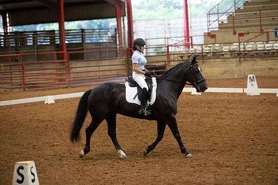 Horse 484
