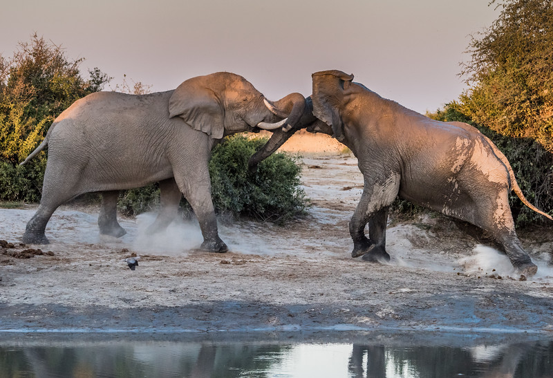 Botswana_June_2017 (4190 of 6179).jpg