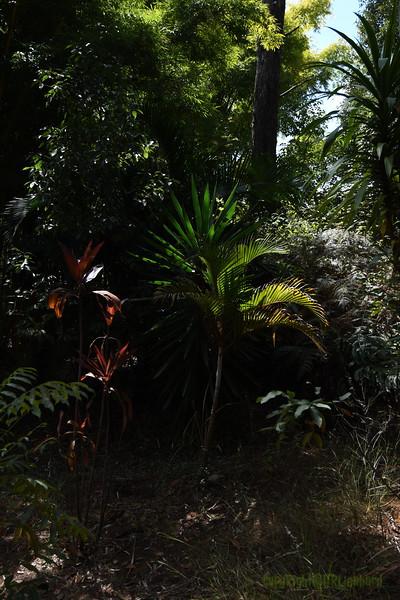 Madagascar 2017 (8)