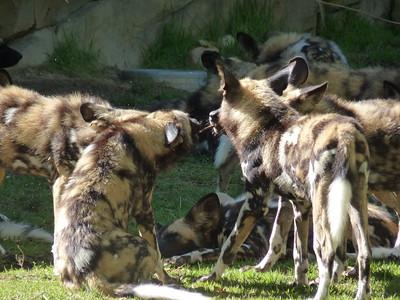 Cincinnati Zoo - 30 July '15