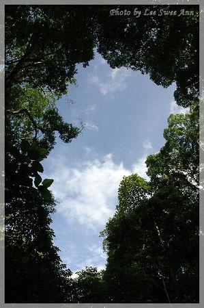 20060110 - FRIM, Kepong Outing