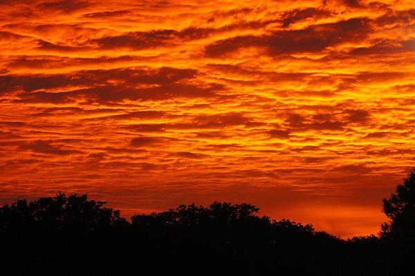 Beautiful Daffin Park Sunset