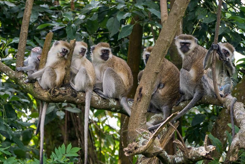Nyugwe-Rwanda-63.jpg