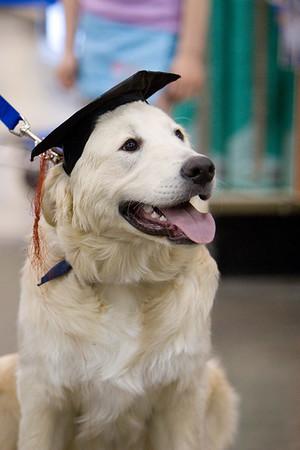 Gilligan's Graduation Day
