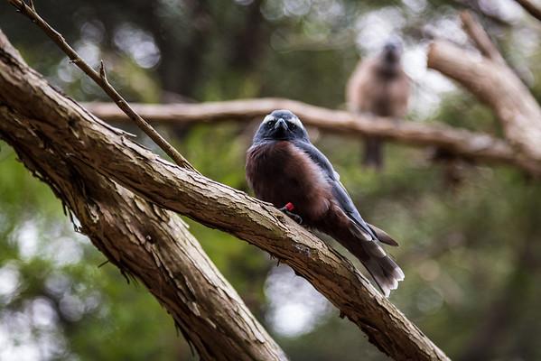Healesville Sanctuary (2012)