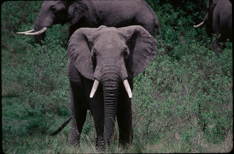 Kenya2_001.jpg