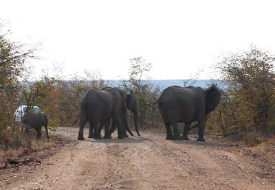 Kruger NP - Big 5