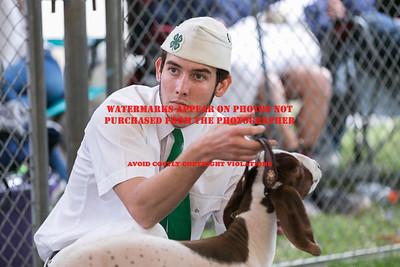 2017 Citrus Fair Goats