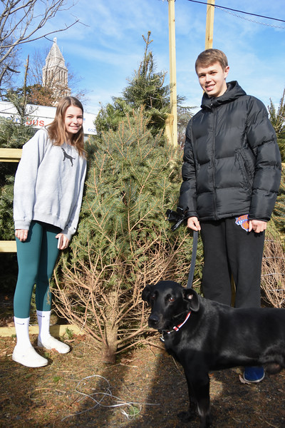 20191207 Getting Christmas Tree 040.jpg
