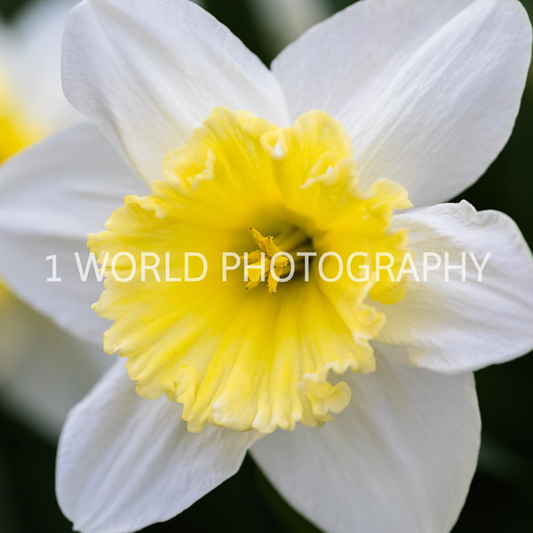 20190416Spring Flowers_Cantigny 4_17_19149--19.jpg