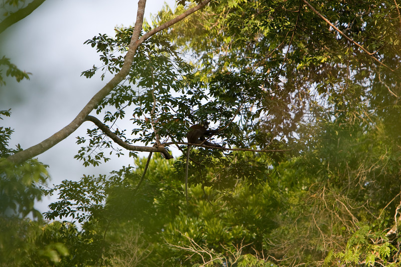 Monkey in the tree.