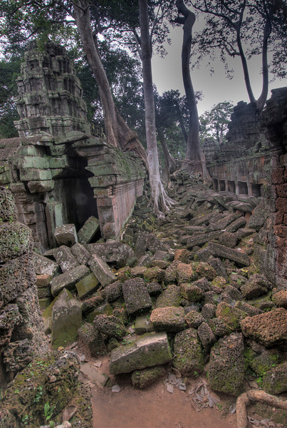 Stones and trees at Ta Prohm inside Angkor Wat