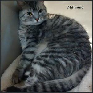 Mikinalo