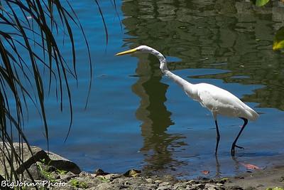 Lake Nicaragua Sunrise Kayaking Bird Watching Tour.