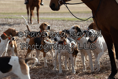 January 10, 2021 Amwell Valley Hounds @ West Highland Farm