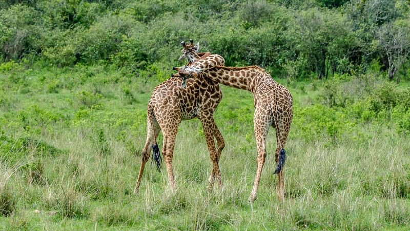 Kenya-0249.jpg