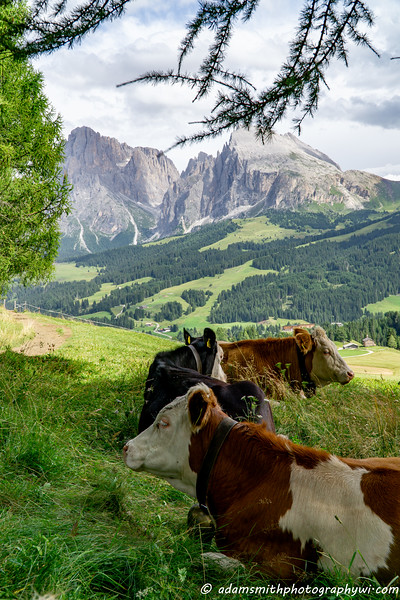 dolomites-italy-mountains-alpe-di-siusi.jpg