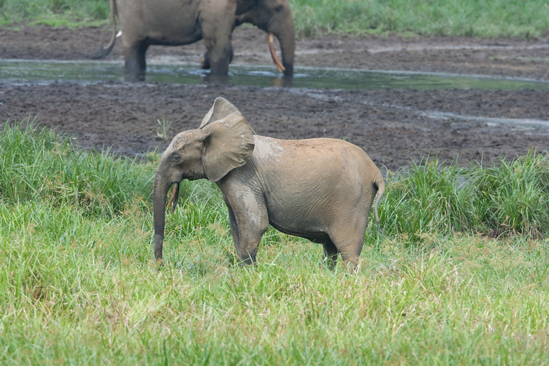 Younger elephant.