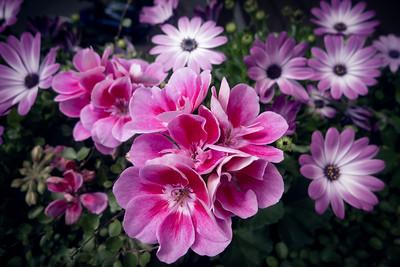 Farbige Blumenpracht Balkonien