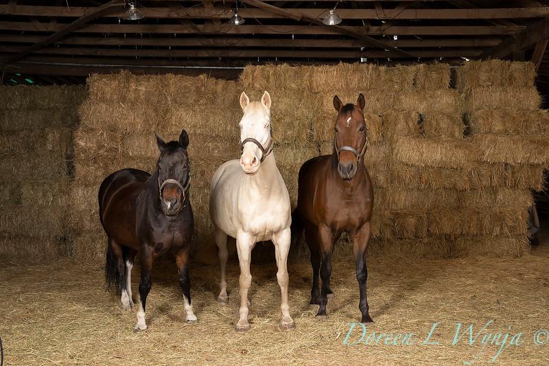 Horse family portrait_125.jpg