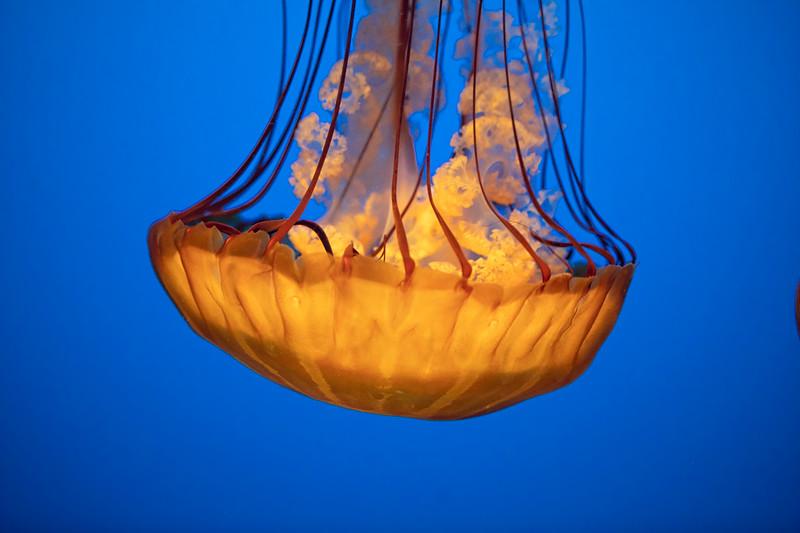 Monterey Aquarium039 copy.jpg