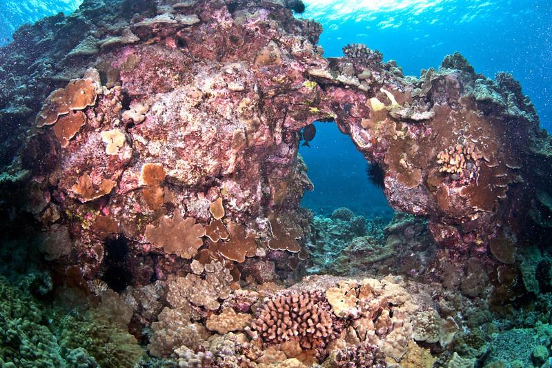 Coral Arch.jpg