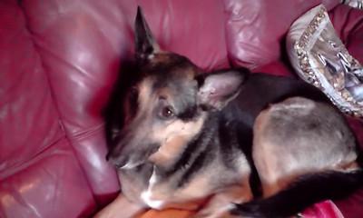 Pets - Video