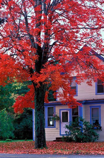 Tree  and House.jpg