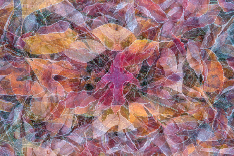 Remnants of Autumn #2