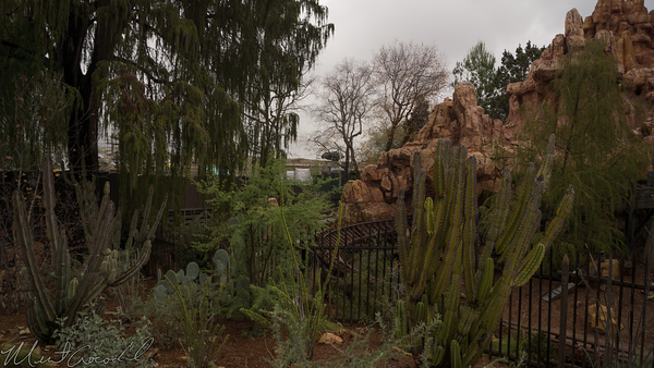 Disneyland Resort, Disneyland, Frontierland, Big Thunder Mountain Railroad, Big Thunder, Trail, Jamboree, Star Wars, Star Wars Land, Rivers Of America, Rivers, River, America