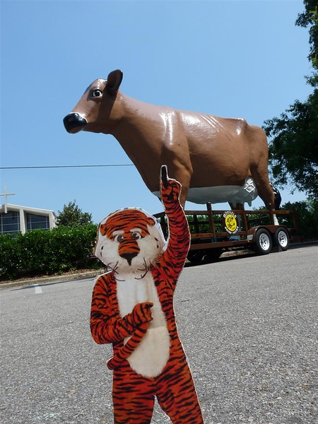 Aubie hanging out with the Mayfield's Dairy Farm Cow.jpg