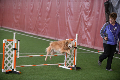 Somerset Hill/GSGRC AKC Agility Trial June 11-12