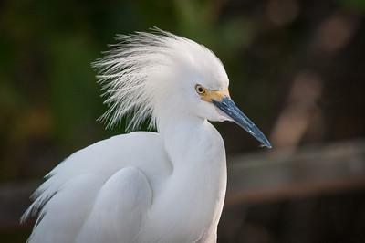 Florida - 2012