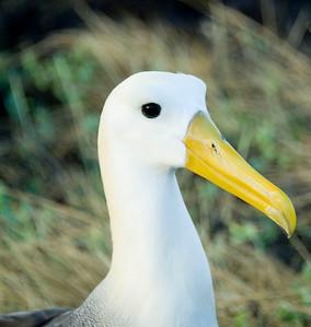 Ecuador 2011 Birds