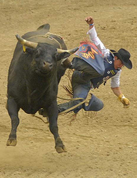 Coombs Bullarama-2008-513A.jpg