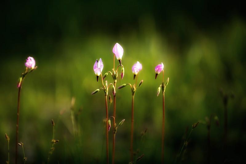 Wild Flowers in Meadow_DSC4277 - Version 2.jpg