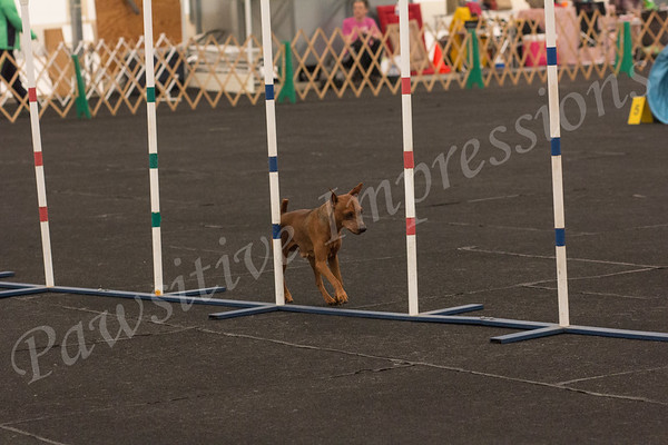 AKC Agility Excellent Classes Columbia, MO Fri. 4-26-13