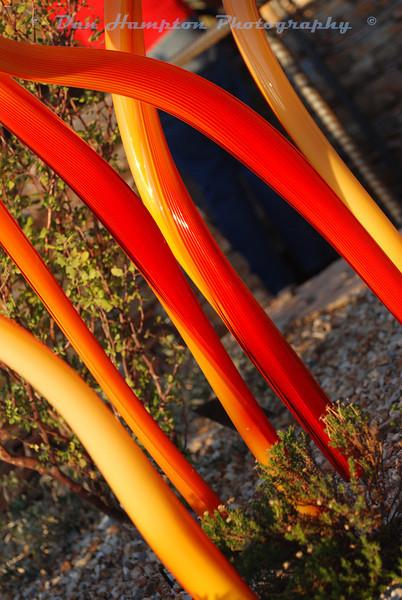 Desert Botanical_69.JPG