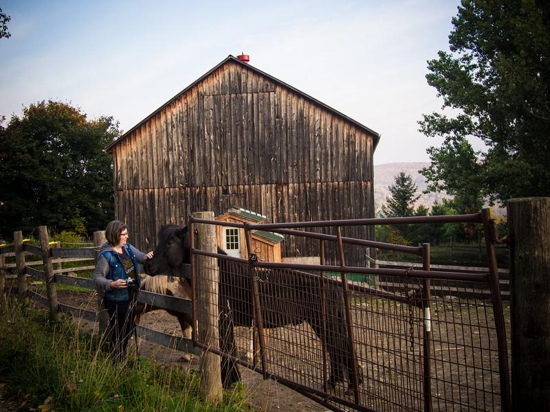 dana and horse 2.jpg