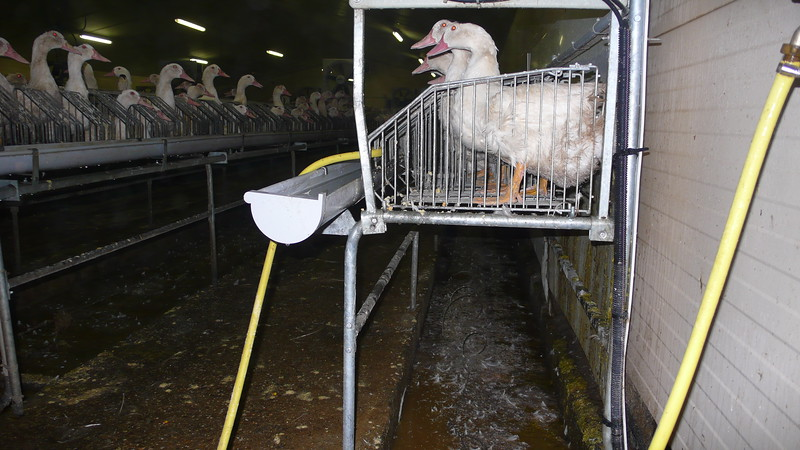 canards-foie-gras-2008-fr-B-012.jpg