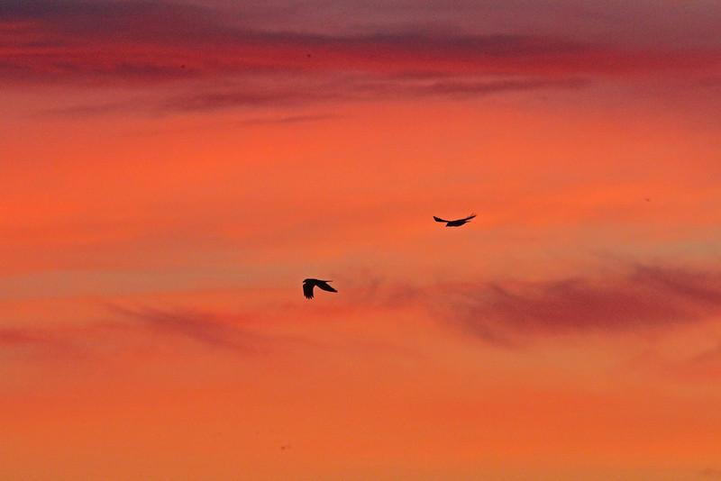 Sunrisesacto1600.jpg